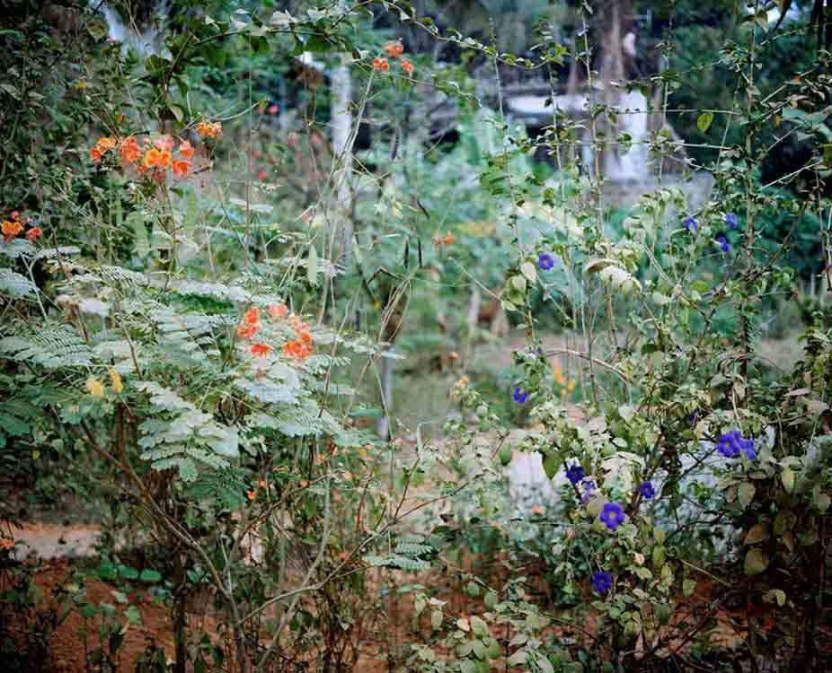 Front Garden I 2004 C Print, 114cm x 147cm